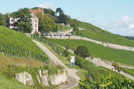 Vineyard Würzburger Stein