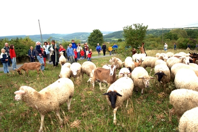 Schafe im NSG-Bromberg-Rosengarten