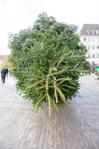 Weihnachtsbaum2017-2