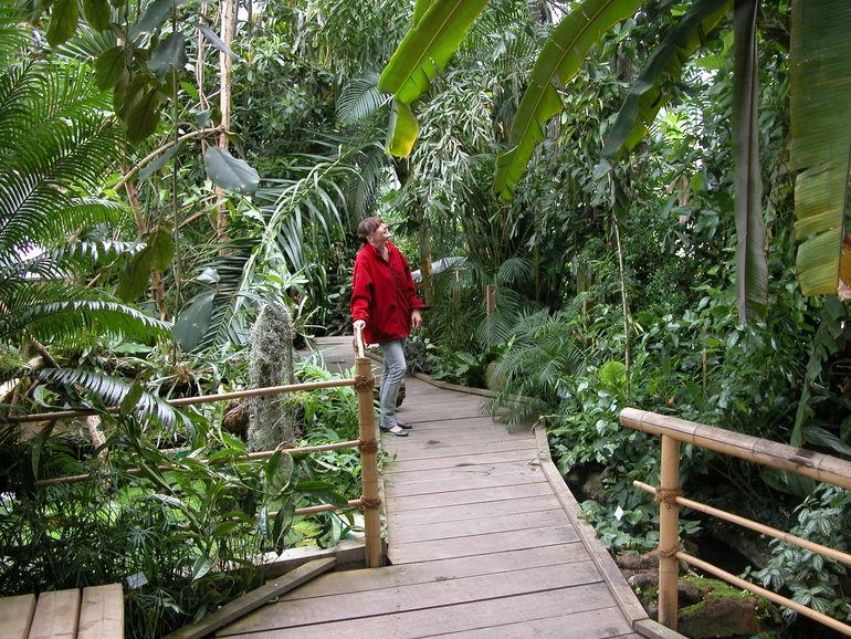 Foto: Tropenhaus des Botanischen Gartens