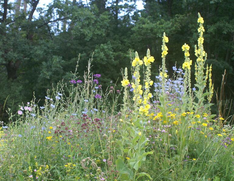 Mit Blühstreifen können Sie Bienen unter die Flügel greifen.