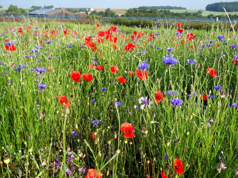 Auch private, innerstädtische Freiflächen bieten wichtige Lebensräume und Trittsteinbiotope für viele Tier- und Pflanzenarten.