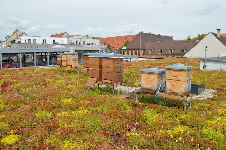 Dach- und Fassadengrün