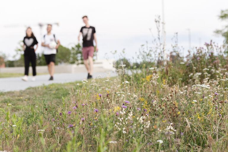 Auch innerstädtische Freiflächen bieten wichtige Lebensräume und Trittsteinbiotope für viele Tier- und Pflanzenarten.