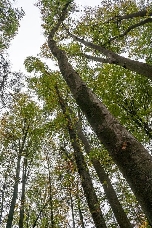 Bestattungswald-1