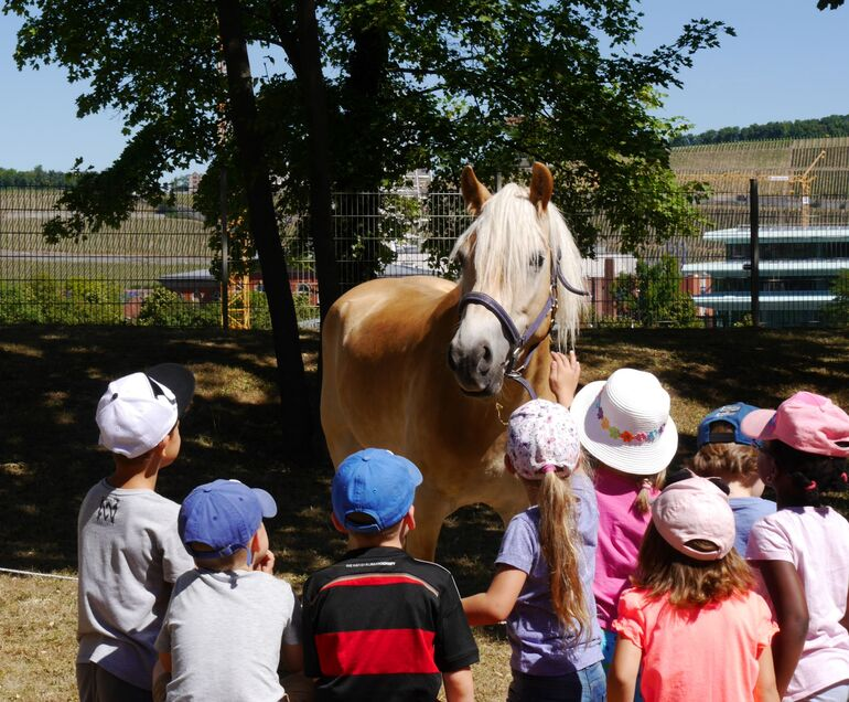 Aktionsstand Pferde