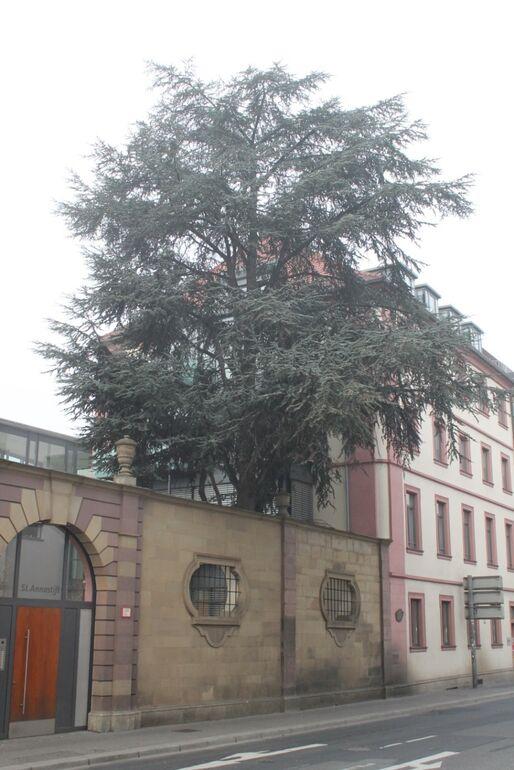 Zeder Theaterstraße am Annastift