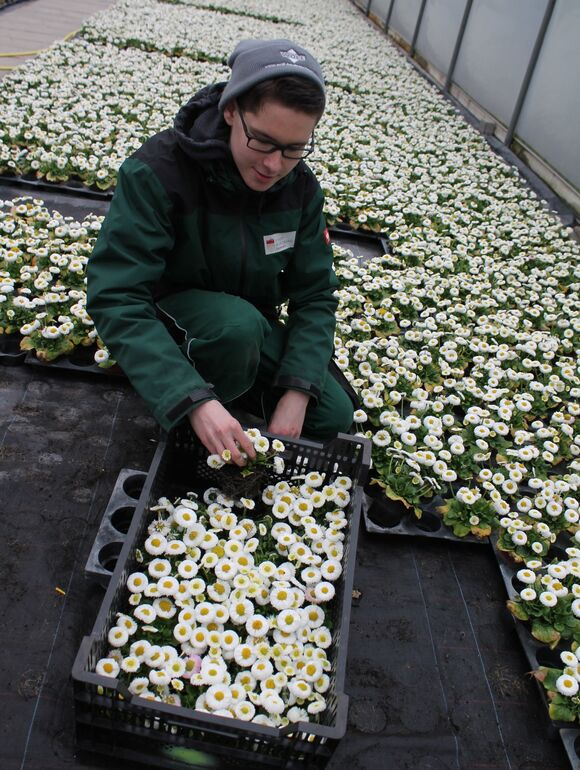 Pflanzung Gartenamt