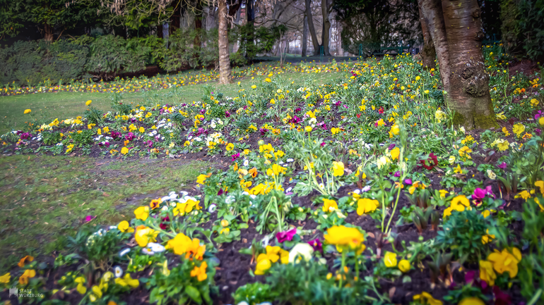 Blütenmeer im Ringpark (c) Ugur Yurdagül