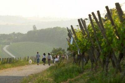 Wanderer auf dem Stein-Wein-Pfad bei Würzburg